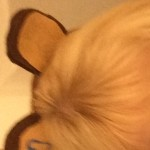 Profile picture of Tonya Stillwell